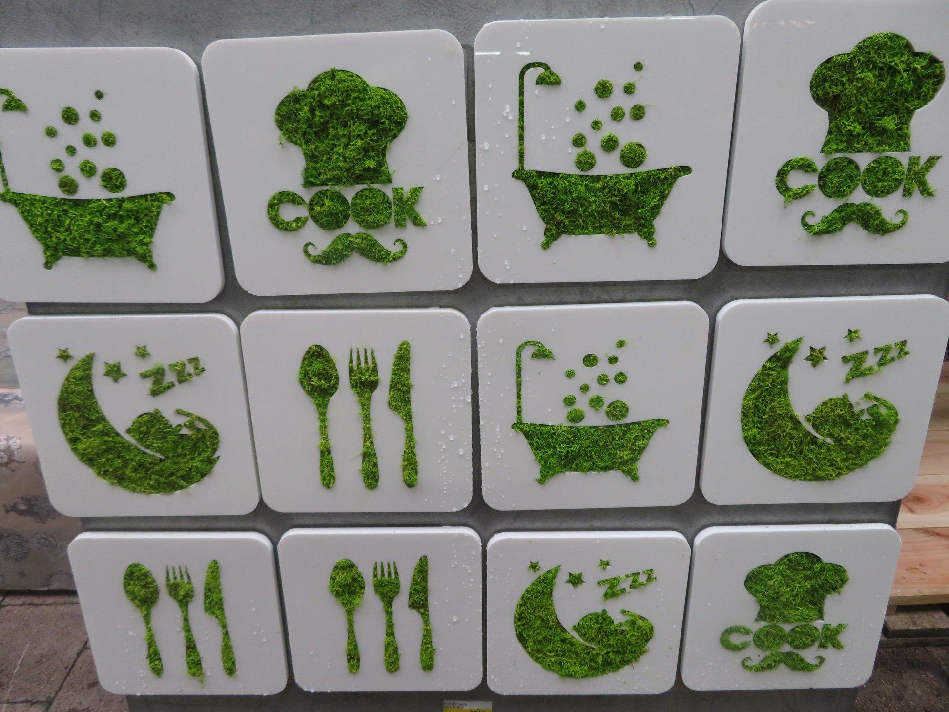 tableaux végétalisme, plante en bocal et art du kokedama