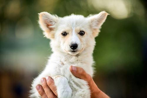 chien heureux et bonne sante